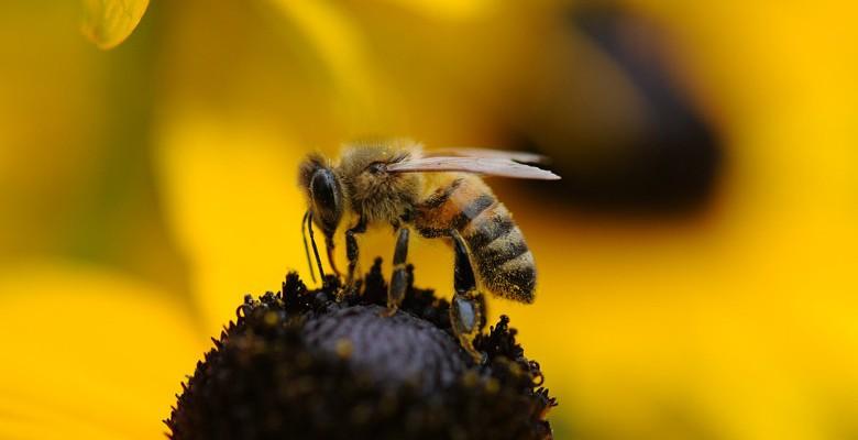 Animations sur les abeilles dans les établissements d'enseignement et les entreprises
