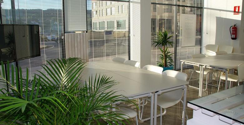Quelles plantes choisir pour aménager les bureaux d'entreprise ?