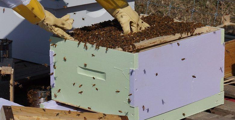 Les enjeux de l'installation de ruches dans les entreprises